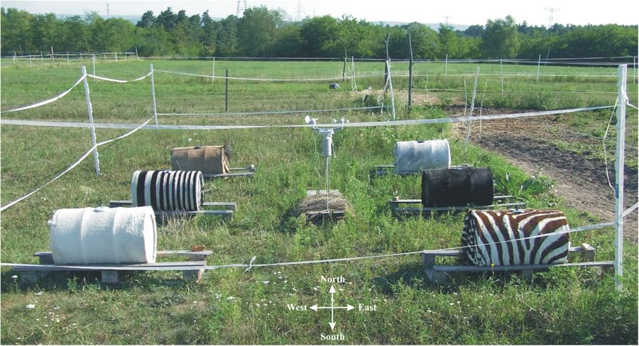 Settling a Heated Debate—Do Zebra Stripes Keep These Animals Cool?