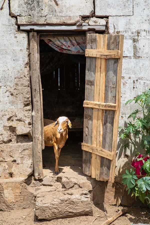 The Goat's Home thumbnail