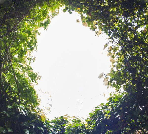 Peeking out of a rabbit hole? thumbnail