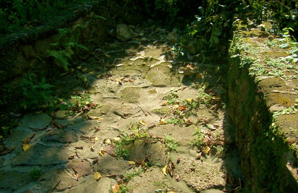 Old Worn Path thumbnail