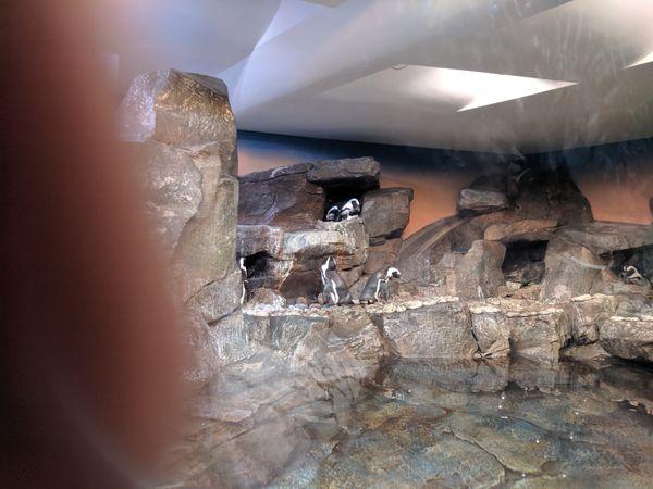 A dispute upon penguins while visiting the Atlanta Aquarium. thumbnail