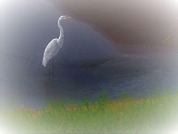 A crane enjoying the sound of a stream. thumbnail