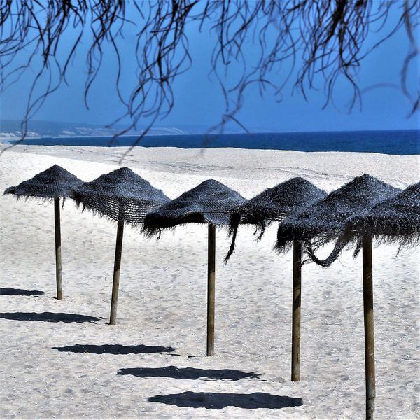 Straw umbrellas at Troia Beach thumbnail