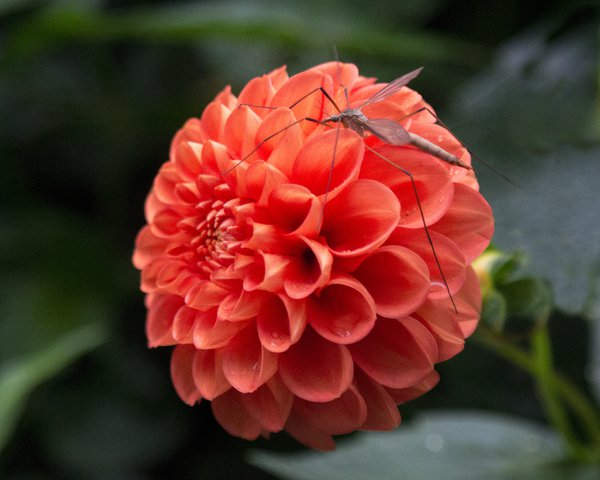 Beautiful flower and bug thumbnail