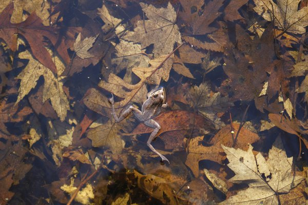 Find the Frog thumbnail