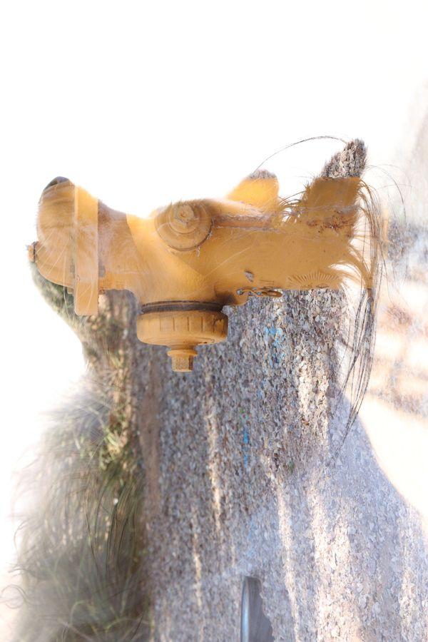 Fire Hydrant Dog thumbnail
