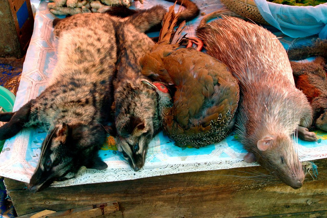 A New Report Says We're Hunting the World's Mammals to Death. What Can Be Done?