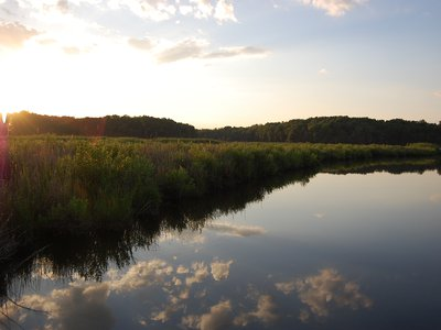 The Global Change Environmental Research Wetland spans 173 acres in Edgewater, Maryland.