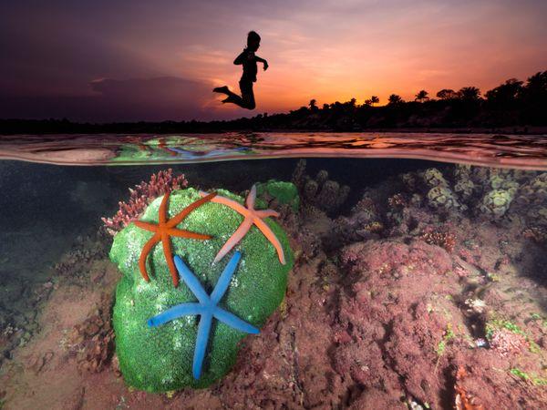 Ocean Joy thumbnail