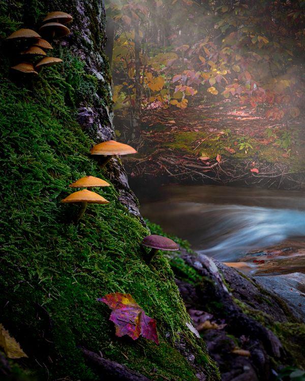 Franconia Notch Fall Fairy Forest thumbnail