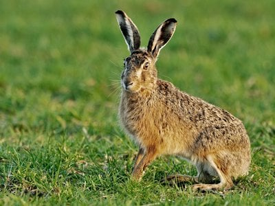 A team of researchers has discovered carefully buried Iron Age chicken and hare bones that show no signs of butchery.