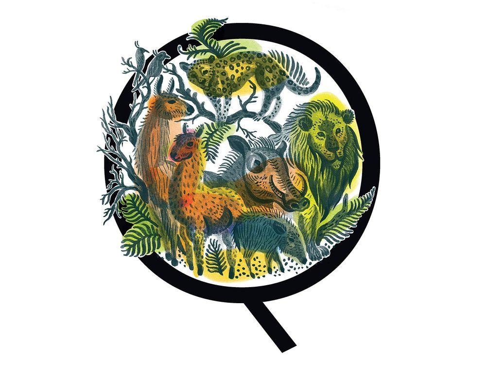 Illustration of smaller animals
