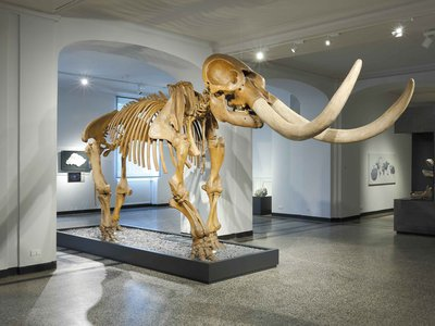 """Peale's mastodon returns to the U.S. as part of this year's upcoming exhibition """"Alexander von Humboldt and the United States: Art, Nature, and Culture"""" at the Smithsonian American Art Museum."""