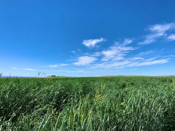 Idaho Farmland thumbnail