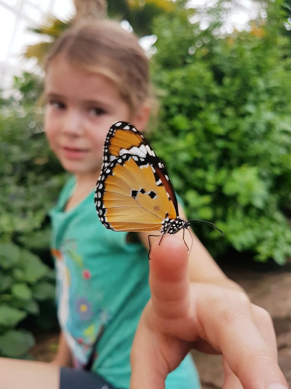 Butterfly Conservatory in Niagara Falls, Canada thumbnail