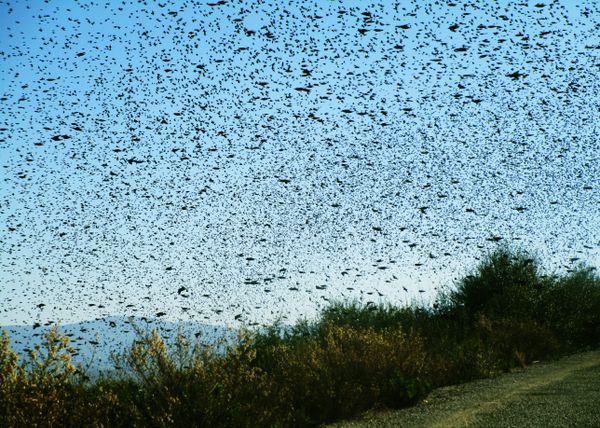 A flock of flying birds thumbnail