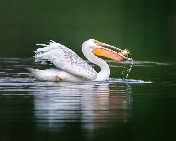 Pelican High Life thumbnail