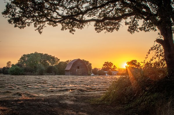 Dusk over a hay field thumbnail