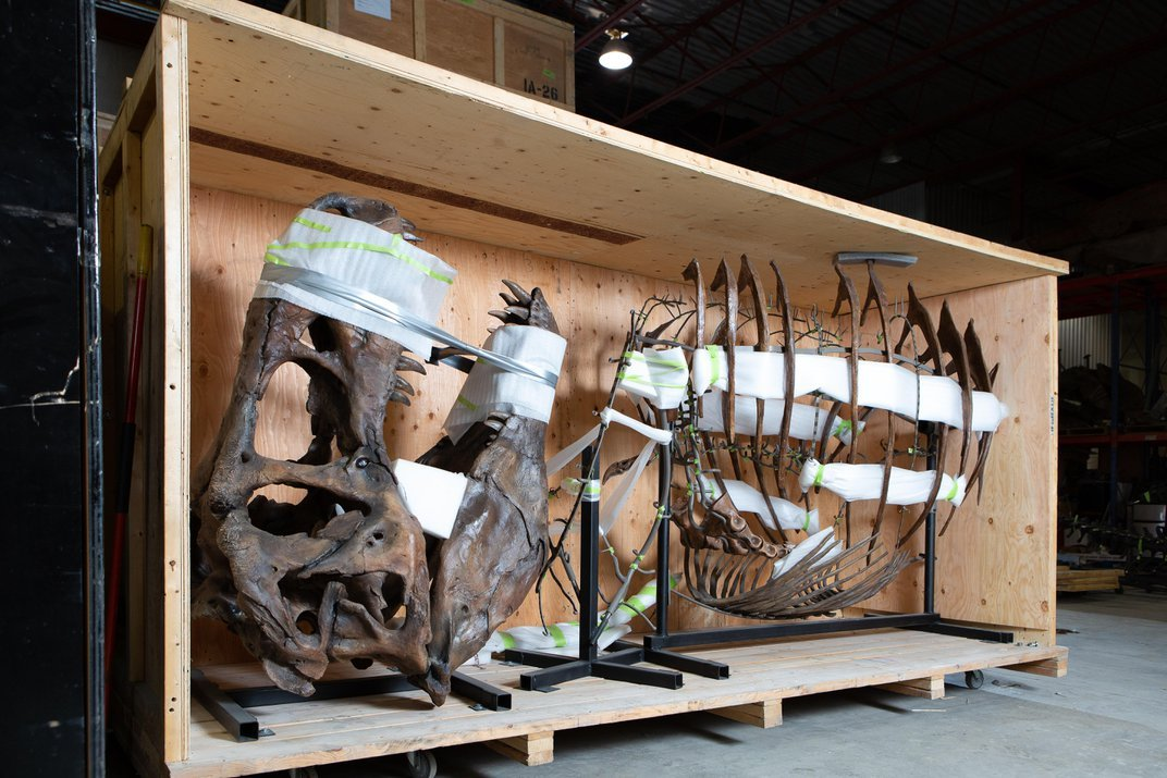 Homecoming King: The Nation's T. rex Returns to the Smithsonian