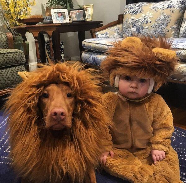Just Lion Around thumbnail