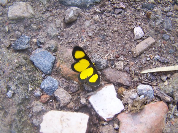 yellow & black thumbnail