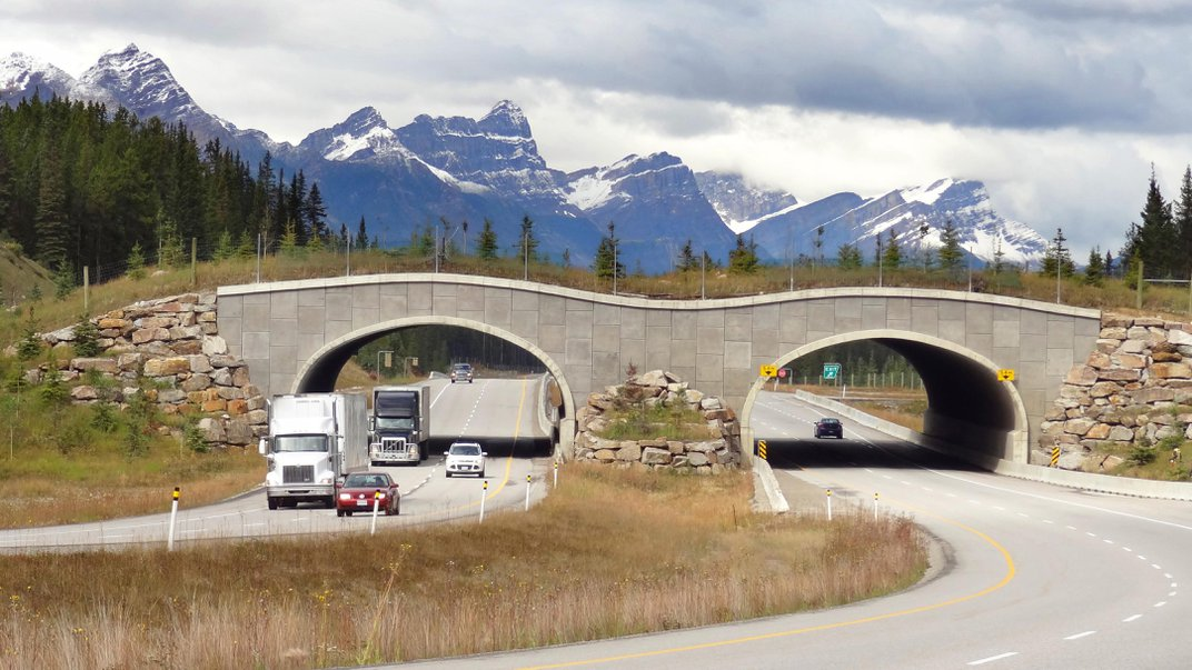 Roadkill Reduced During Lockdowns, but Traffic Is Increasing Again