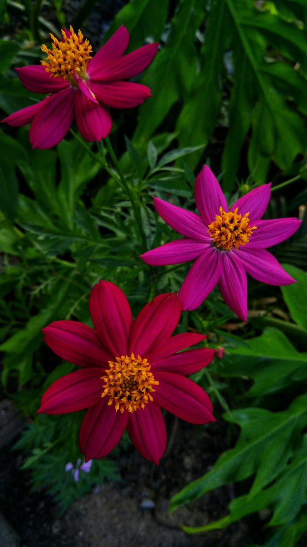 Cosmos more and more thumbnail