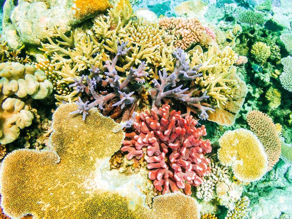Coral Reef Smell