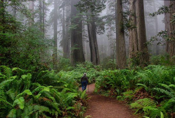 A gentle hike through the redwoods. thumbnail