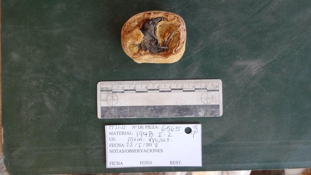 Brown mummified shew and a white identification label