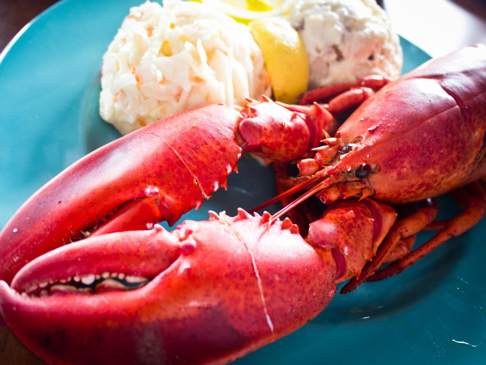 Lobster on a teal blue plate with a side of coleslaw, lemon wedge and potato salad