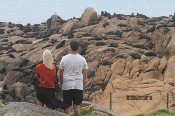 Watching the sea wolves in Cabo Polonio, Uruguay.  thumbnail