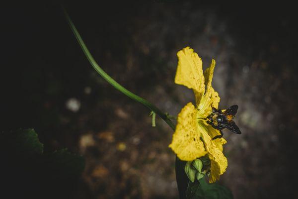 Bumble Bee experience thumbnail