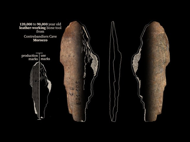 A bone tool from Contrebandiers Cave likely used for making clothes out of the skin of predators.