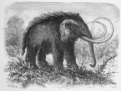 Engraving of a woolly mammoth.