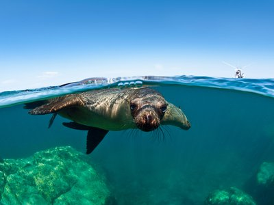 Using seal bombs to deter marine mammals is legal, though using them to round up target species is not.