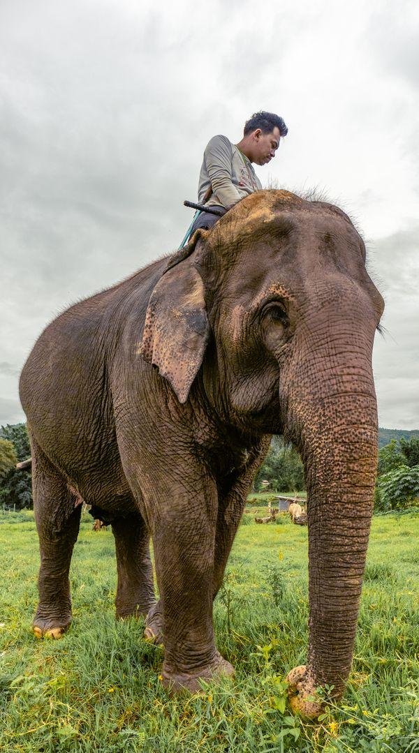Elephant and his Mahout thumbnail