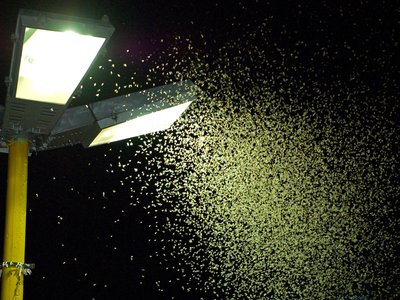 A mass of insects teems around an outdoor lamp in Brazil.