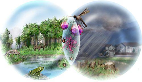 20110520102421biodiversity_loss1_h.jpg