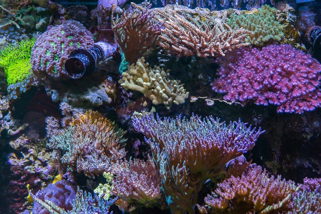 Live coral reef.