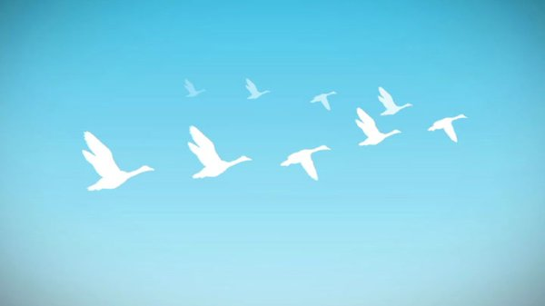 Preview thumbnail for Ask Smithsonian: Why Do Geese Fly in a V?