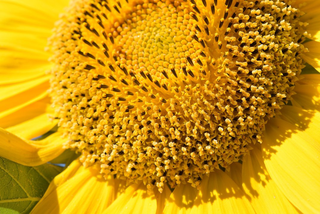 The Fibonacci Sequence Is Everywhere—Even the Troubled Stock Market