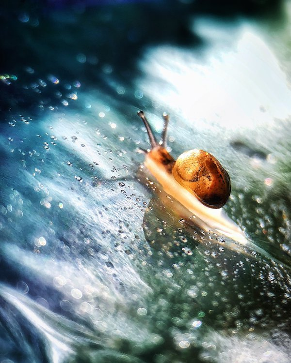 A small snail sliding on blue and green glossy surface thumbnail