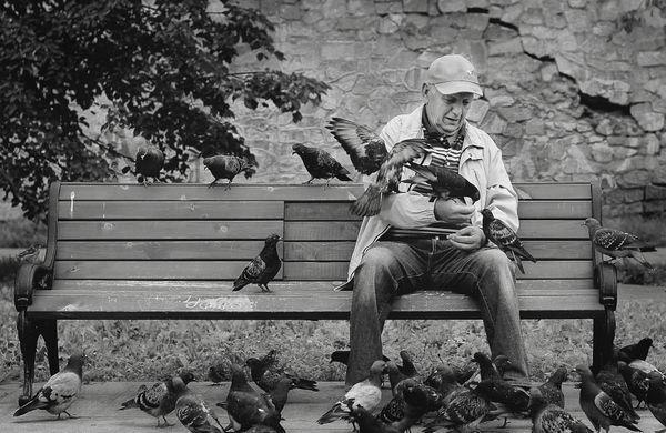 Man and pigeons thumbnail