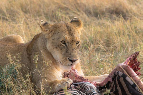 Breakfast in Mara thumbnail
