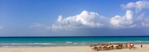 Camel Shepherds of Somalia thumbnail