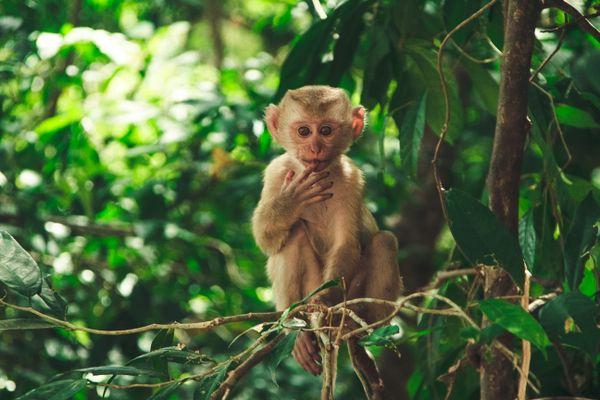 Сurious monkey thumbnail