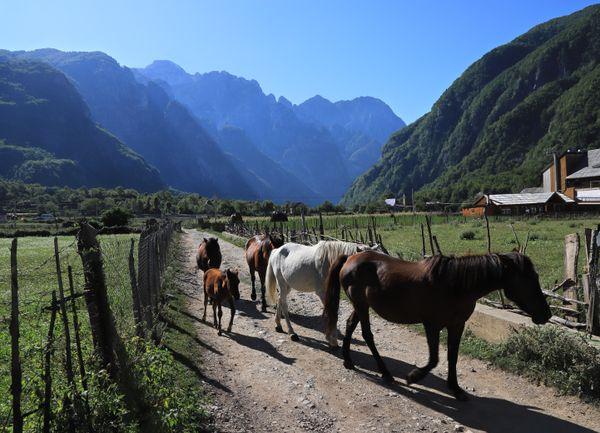 Horses In Theth thumbnail