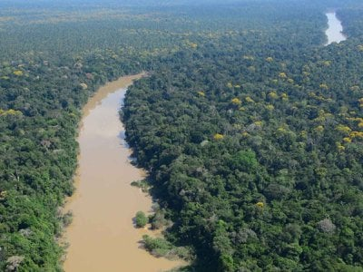 The Algodón River flows through a forest of the Amazon Basin in the remote northeastern corner of Peru. Scientists collected and analyzed a series of ten roughly 3-foot-long soil cores from three sites, each located at least a half-mile away from river courses and floodplains.
