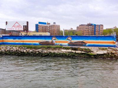 American Black Duck by Peter Daverington at Halletts Point, Queens, is one of nearly 100 murals that make up the Audubon Mural Project.
